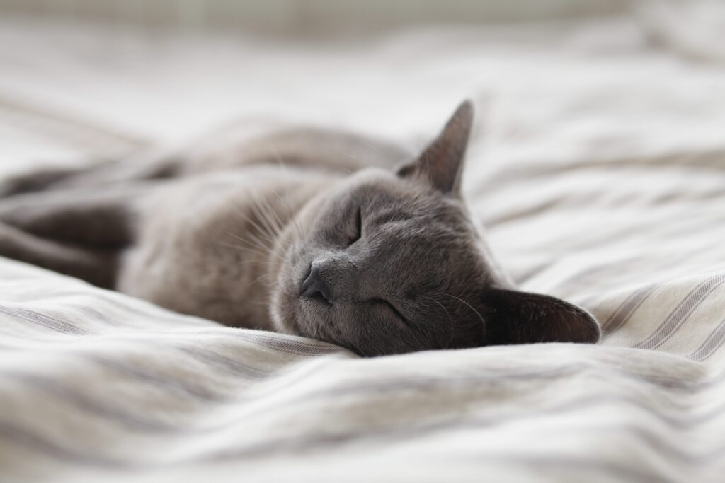 Don't forget your beauty sleep - mental health support